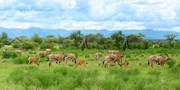 $1719 -- 8-Night Kenya Camping Safari, Save $430
