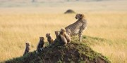 $2990 -- Guided 6-Night Kenya Tour incl. Safaris & Air