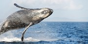 $66 -- Marine Wildlife Tour at 'Best Spot in North America'