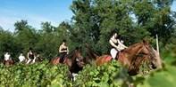 Temecula Wine Country Horseback Riding w/Tastings