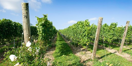 £29 -- Hampshire Vineyard Tour for 2 with Tastings & Lunch