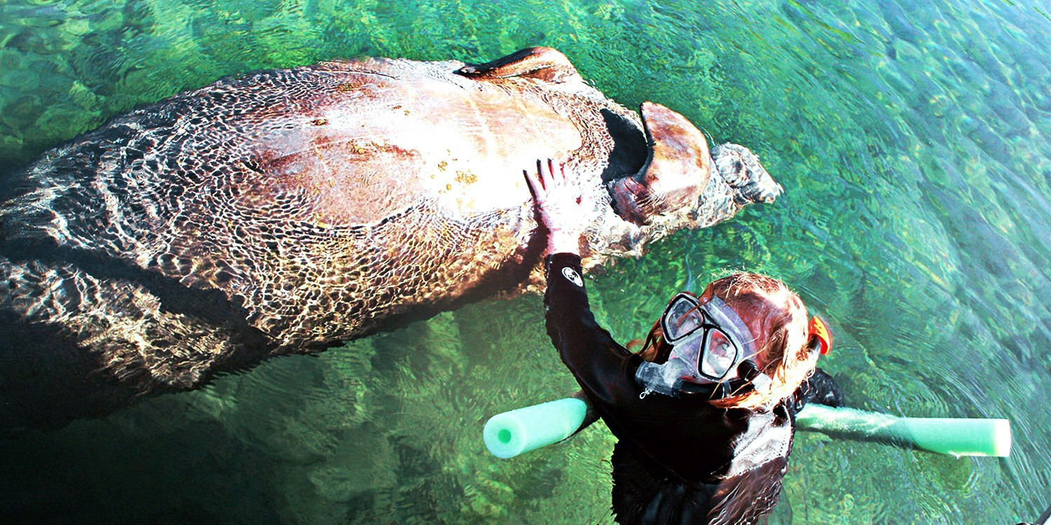 Swim with Manatees: Tour & Breakfast for 6, Half Off