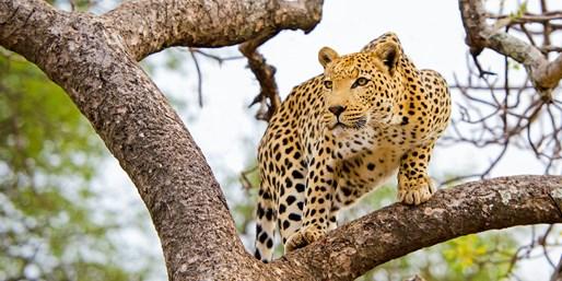 $3099 & up -- 10-Nt South Africa Safari w/Flights, $440 Off