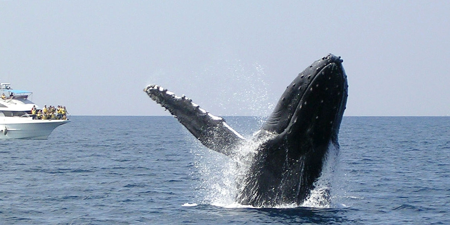 $35  -- Okinawa, Japan: 3-Hour Whale-Watching Cruise