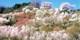 """¥13,600 -- 日本随一の""""桃源郷""""へ 全日同額&特典付 往復新幹線日帰り旅"""