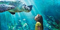 $70 -- Canadian Exclusive: SeaWorld San Diego 7-Day Tickets
