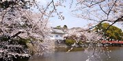 $116-$122 -- Japan: Odawara Castle Tour w/Cherry Blossom