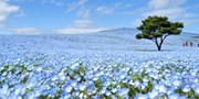 £30pp -- Japan: Spring Flowers Day Tour, Save 50%