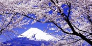 $116-$128 -- Mt Fuji: Spring Flowers Tour w/Wine Tasting