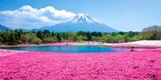 $116-128 -- Japan: Mt Fuji, Sakura & Strawberry-Picking