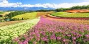 653 € -- Japan: Highlights von Hokkaido in 5 Tagen