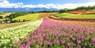 $628-$874 -- Hokkaido Scenic Spots 5-Day Tour