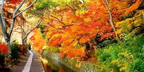 $2,697 -- 秋季限定!京都一日遊,6 處賞楓名所賞楓紅