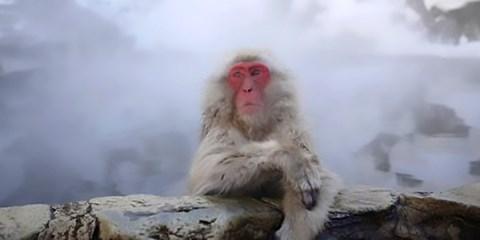 97€ -- Alpes japonaises : venez voir les singes des Neiges !