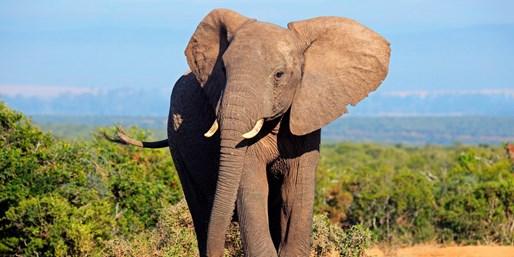 ab 1299 € -- Erlebnisreise durch Südafrika zum Top-Preis