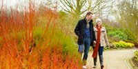 £47 -- RHS Gardens: Annual Gift Membership, Save 17%