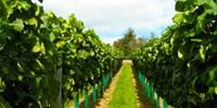 £7.95 -- Devon Vineyard Tour & Wine Tasting for 2, Was £15