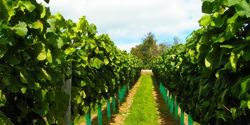 £7.95 -- Devon Vineyard Tour & Wine Tasting for 2, Was £15
