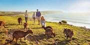 ¥12,499起 -- 仲夏圣诞 亲子新玩法!独家特惠 首航直飞阿德莱德 南澳洲8日品质游