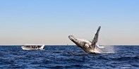 $35 -- Whale-Watching Cruise off Darling Harbour, Save 56%