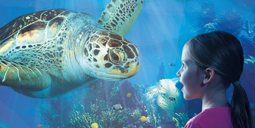 $17-$22 -- SEA LIFE Aquarium in Auburn Hills, Save 10%