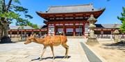 ¥5,999 -- 立减千元暑假游!日本超值特惠双古都 6 日游 升级温泉 可选两千出头北海道