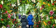 £19.50 -- Entry for 2 to Kew Gardens & Orchids Festival