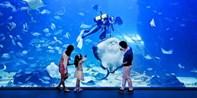 ¥85 -- 韩国京畿道一山海之星单人门票 海洋馆+动物馆 首都圈最大 交通便利