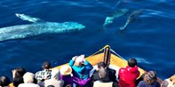 $25 -- 3-Hour Whale-Watching Excursion, Half Off