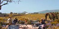 Top-Rated Food Tours: San Luis Obispo or Paso Robles