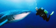 $49 & up -- Award-Winning Phuket Snorkeling & Diving Tours