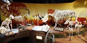 Brand New on I-Drive: Largest Skeleton Museum in the U.S.
