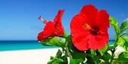 ¥54,700 -- 青森発 沖縄4日間ツアー ハイブリッドレンタカー乗り放題 ホテル選択可