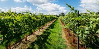£15 -- Award-Winning Vineyard Tour & Tastings for 2, 50% Off