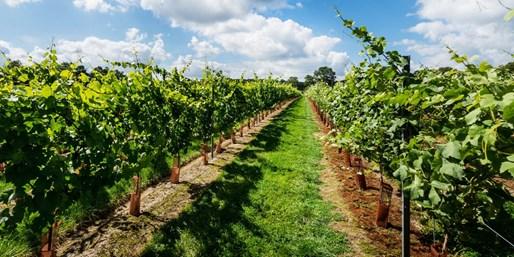 £15 -- Award-Winning Vineyard Tour & Tastings for 2, 50% Off