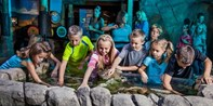 $12-$13 -- SEA LIFE Aquarium in Tempe, Save up to 30%