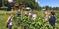 $69 -- Cowichan Valley Wine Tour from Victoria, Reg. $120