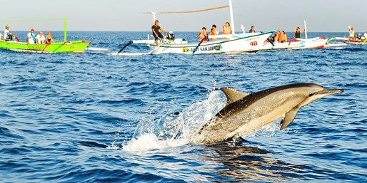 $39 -- Northern Bali Dolphin Tour w/Transfers & Snorkeling