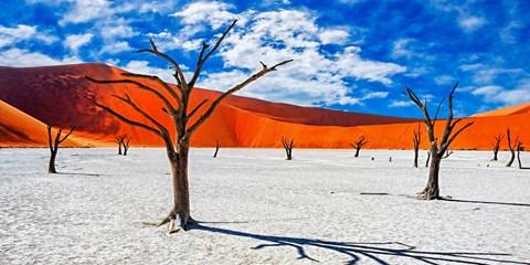 """¥7,900起 -- """"非""""比寻常小众游!纳米比亚红沙漠/坦桑尼亚动物嘉年华/摩洛哥深度"""