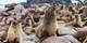 """¥7,900起 -- """"非""""比寻常小众游!穿越纳米比亚千年红沙漠/坦桑尼亚动物嘉年华/摩洛哥深度体验"""