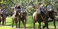 489€ -- Bali : 4 jours de magie avec les éléphants, -51%