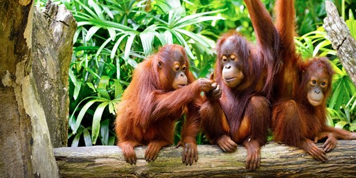 $1225pp -- Borneo: 7-Night Rainforest Adventure w/Meals