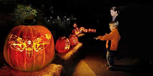 Chicago Botanic Garden: Night of 1,000 Jack-o'-Lanterns
