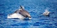 ¥52 -- 6.2折 阿德莱德双人2小时海豚观赏之旅 甲板360度观景平台