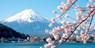 $85pp -- Tokyo Sakura Day Tour w/Mount Fuji Views & Lunch
