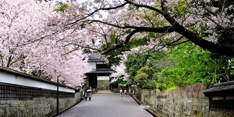 ¥22,800 -- 大阪港発 週末フェリー九州桜巡り3日間 露天+昼食