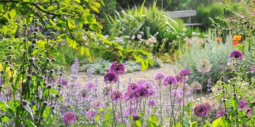 £35 -- The Beth Chatto Gardens: Annual Membership for 2
