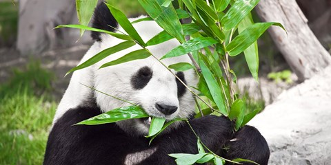138€ -- Escapade au Zoo de Beauval : nuit + parc, -25%
