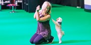 £13.50 -- National Pet Show in London, Save 30%