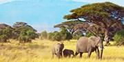 £1709pp -- Kenya Safari & All-Inc Zanzibar, from the North
